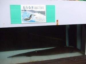 Dscf0259